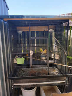 Big cage and 2 pair canaries.