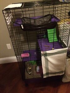 Female Chinchilla for rehoming