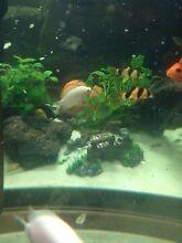 Aquarium plant and fish Aeroglen Cairns City Preview