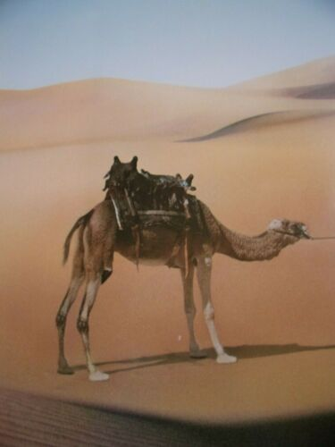 ISHTAR (Camel) Original THEATER-USED Movie Poster 27x40 Rolled One Sheet SS - C7