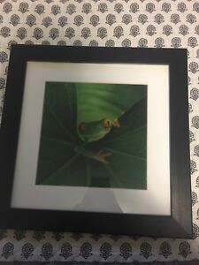 Moving frog picture