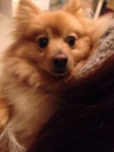 a lovely Hiromi  looking for a new home Bexley North Rockdale Area Preview