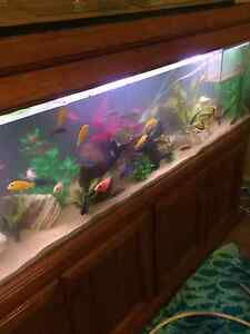 Large fish tank Maryland Newcastle Area Preview