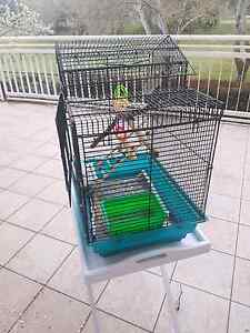 Budgie cage and stand Holt Belconnen Area Preview