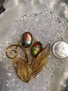 Ammolite brooches