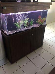 4ft Fish Tank Complete Regents Park Logan Area Preview