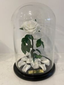 My Lasting Bouquet - White everlasting rose in dome