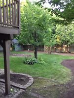 Lawn care services! Lawn cutting and maintenance!
