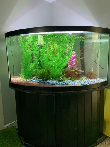 Used 92 gal corner aquarium tank and ...