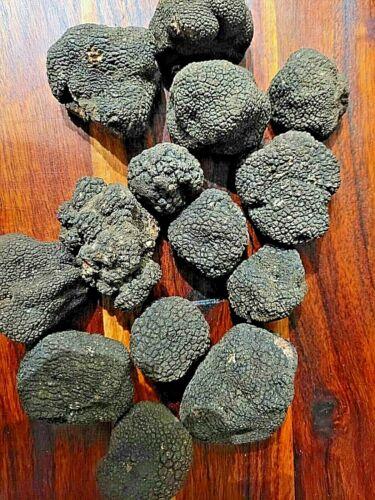 Black Truffle 40 gr. (1.41 oz) Magnificent Italian Tartufo Various Sizes/Weights