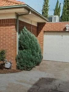 Free plant Box Hill North Whitehorse Area Preview