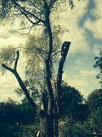 Tree & limb removal, lot cutting, chipping insured free quotes