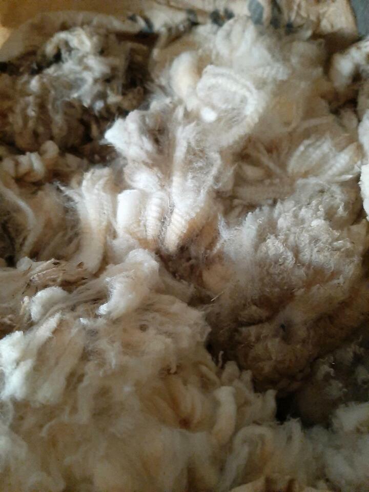 Schafwolle als Dünger, Schneckenabwehr und zum Basteln in Langenstein