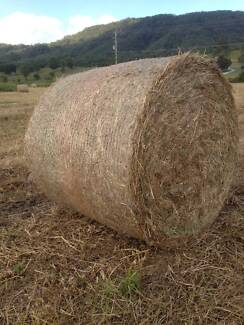 Pasture Hay 4x4 round $75 Canungra Ipswich South Preview