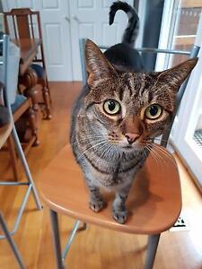 Bengal female cat 4 years old Kallista Yarra Ranges Preview