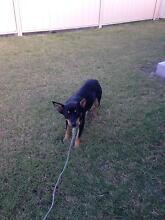 Dog Found - 9-2-2016 Charlton Buloke Area Preview