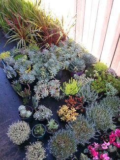 Succulents galore Thomastown Whittlesea Area Preview