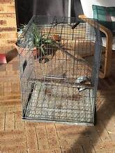 Cockie Cage (or rodent cage) Eden Hill Bassendean Area Preview