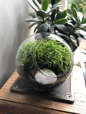 Mini Moss Terrarium • Micro Mossarium • Tiny Terrarium With Live Moss