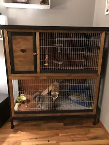 Holland lop rabbits with two story house