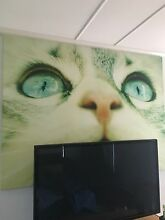 Large Cat Canvas Wynnum Brisbane South East Preview