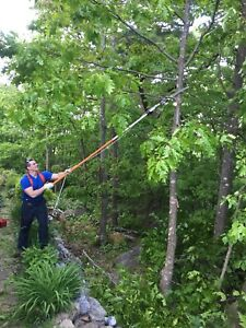 Tree Trimming, Pruning, Removal and Cleanup. (Small Jobs)