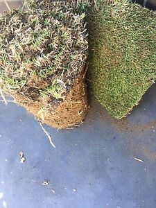 Free two rolls of kikuyu grass Ashfield Bassendean Area Preview