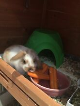 Hutch, guinea pigs, accessories Hendon Charles Sturt Area Preview