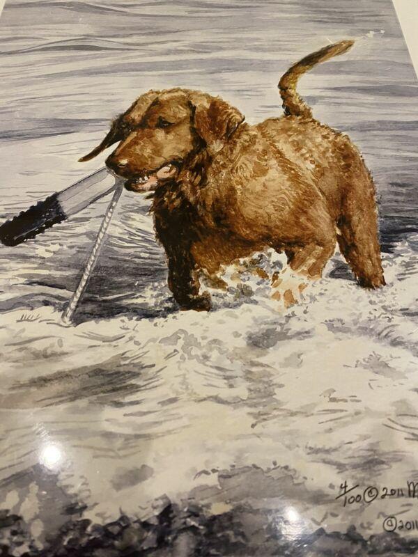 Chesapeake Bay Retriever In Water Ltd Ed 11x14 Print By Van Loan