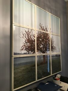 Original photo in 9 frames of a cherry tree