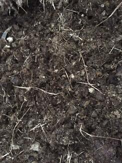 Horse manure - Delivered! Rowville Knox Area Preview