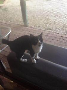 Found at Mandurah Road Baldivis Friday 16th February Male Kitten Perth Perth City Area Preview
