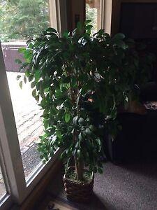 Beautiful Faux Ficas plant