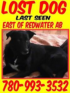 Missing dog!  Please help!!