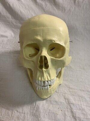 Pvc Life Size Human Anatomical Anatomy Skull Head Skeleton School Teaching Model