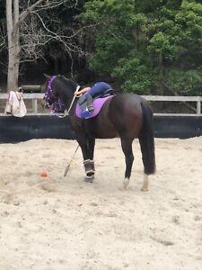 Wanted green/unbroken pony