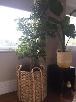 Indoor/Outdoor huge Pot