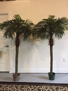 "Artificial Palm Trees. Like New, 67"" tall 45""wide $65 each"