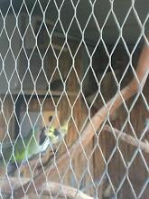 Aviry birds Beverly Hills Hurstville Area Preview