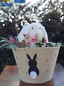 Dwarf X Mini Lop bunny rabbits