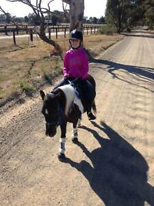 Awesome Childs pony
