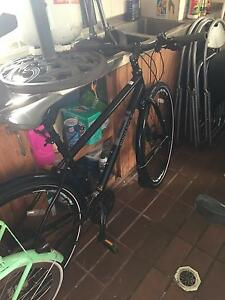 Pinnacle Lithium 3 Hybrid Bike Womens Rose Bay Eastern Suburbs Preview