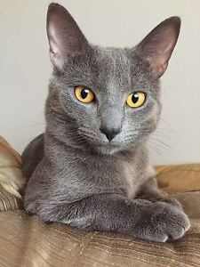 1 Year Old Male Cat