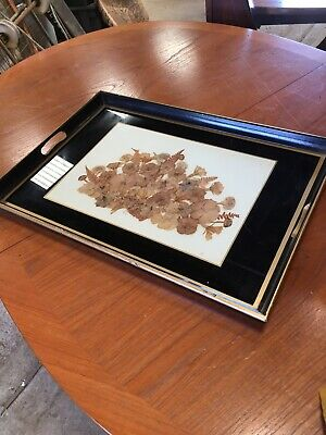 Vintage Old Tray Glass Top Dried Flower Display Decorative   29/8/Z