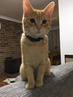 9 Month Old Male Cat