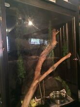 Diamond Python and large custom made enclosure for sale Coopers Plains Brisbane South West Preview