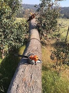 Trees logs wanted Iluka Joondalup Area Preview
