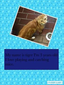 Tiger needs a new home urgently. Belmont Lake Macquarie Area Preview