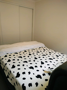 Double room in a new apartment in manly area Manly Vale Manly Area Preview