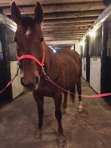 Looking for Board for 16yo Mare
